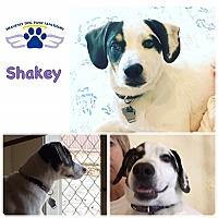 Adopt A Pet :: Shakey - Folsom, LA