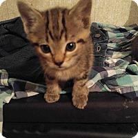 Adopt A Pet :: MARCUS - Golsboro, NC