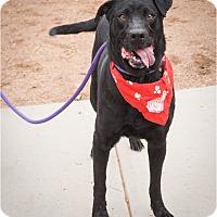 Adopt A Pet :: Bonnelle - Phoenix, AZ