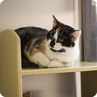 Adopt A Pet :: Francine - Salem, MA