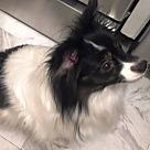Adopt A Pet :: Maddy (age 8) in GA