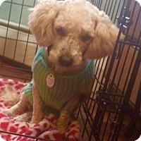 Adopt A Pet :: Bayou in RI - Providence, RI