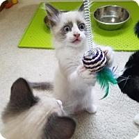 Adopt A Pet :: Frank - Hampton, VA