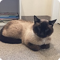 Adopt A Pet :: Ping - Peace Dale, RI