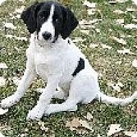 Adopt A Pet :: Tesla - Alliance, NE