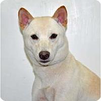 Adopt A Pet :: Frisbee - Port Washington, NY