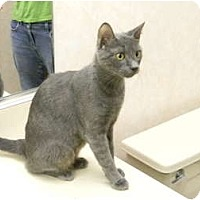 Adopt A Pet :: Felicia - Bonita Springs, FL