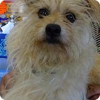 Adopt A Pet :: Grover - S. Pasedena, FL