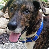 Adopt A Pet :: Marbles - Fennville, MI