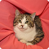 Adopt A Pet :: Opal - Red Wing, MN