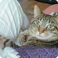 Adopt A Pet :: Mona - E. Claridon, OH
