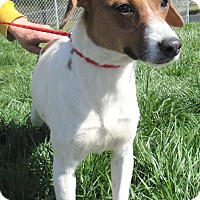 Beagle/Hound (Unknown Type) Mix Dog for adoption in Reeds Spring, Missouri - Princess