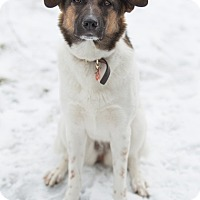 Adopt A Pet :: Aero - Drumbo, ON