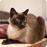 Adopt A Pet :: TOLOUSE - Murray, UT