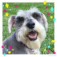Adopt A Pet :: Jason - Sharonville, OH