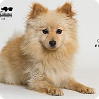 Adopt A Pet :: Cruz - Baton Rouge, LA