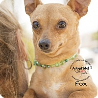 Adopt A Pet :: FOX - Inland Empire, CA
