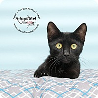 Adopt A Pet :: Mia - Apache Junction, AZ