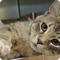 Adopt A Pet :: Gary - Daytona Beach, FL