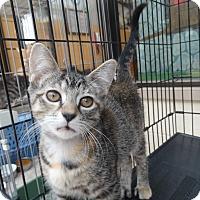 Adopt A Pet :: Emery 2 - Elyria, OH