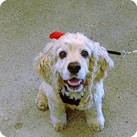 Adopt A Pet :: Zack - Sacramento, CA