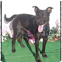 Adopt A Pet :: ROSCOE - Marietta, GA