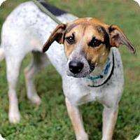 Australian Cattle Dog Mix Dog for adoption in richmond, Virginia - DORA