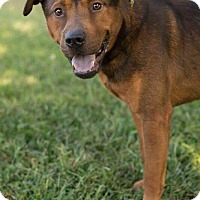 "Adopt A Pet :: Keylargo aka ""Kelo"" - Roanoke, VA"