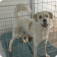 Adopt A Pet :: Nickie - Bloomington, IL