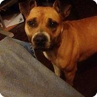 Adopt A Pet :: Phoenix (COURTESY POST) - Baltimore, MD