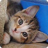 Adopt A Pet :: Pickle - Rustburg, VA