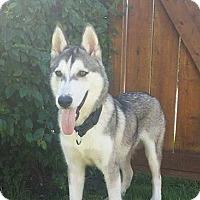 Adopt A Pet :: Rex - Calgary, AB