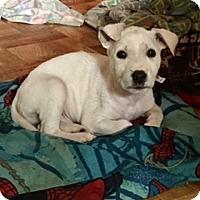 Adopt A Pet :: Alabama - McKinney, TX
