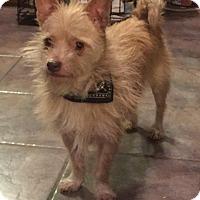 Adopt A Pet :: JoJo - Bernardston, MA