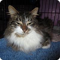Adopt A Pet :: PrincessLeia - Coos Bay, OR