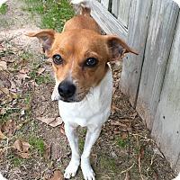 Adopt A Pet :: Milton - Boston, MA