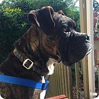 Adopt A Pet :: Moeshe - Woodinville, WA