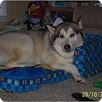 Adopt A Pet :: Jenna - Belleville, MI
