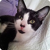 Adopt A Pet :: Micestro (KL) - Little Falls, NJ