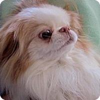 Adopt A Pet :: Pixie - Aurora, CO