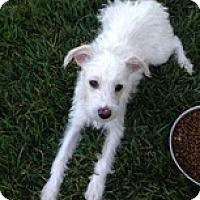 Adopt A Pet :: Tika - Calgary, AB