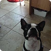Adopt A Pet :: Mr Gizmo - Temecula, CA