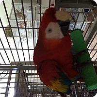 Adopt A Pet :: Rocket - Punta Gorda, FL