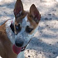 Adopt A Pet :: Chloe - La Crosse, WI
