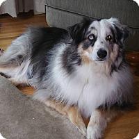 Adopt A Pet :: Thief - Elk River, MN