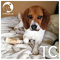 Adopt A Pet :: TC - Novi, MI