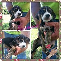 Adopt A Pet :: Jasmine - Stamford, CT