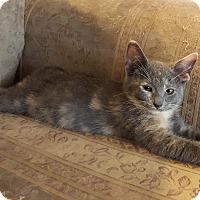 Adopt A Pet :: Heather - Berkeley Hts, NJ