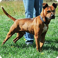 Adopt A Pet :: Chase - Dublin, VA