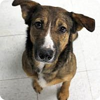 Shepherd (Unknown Type) Mix Dog for adoption in Yukon, Oklahoma - Mika